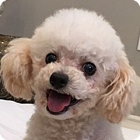 Adopt A Pet :: Jodie - La Costa, CA