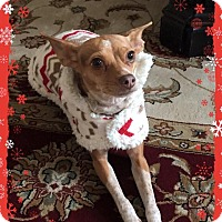 Adopt A Pet :: Iggy - Yuba City, CA
