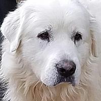 Adopt A Pet :: Tucker - Newnan, GA