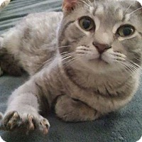 Adopt A Pet :: Mellow - Locust, NC