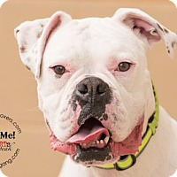 Adopt A Pet :: Hurley - Hurst, TX