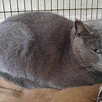 Adopt A Pet :: Wanda - Bryson City, NC
