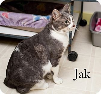black cat 13 jordan