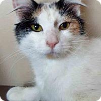 Adopt A Pet :: Cleo - Oswego, IL