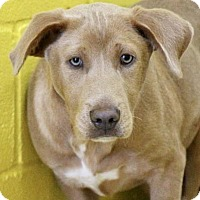 Adopt A Pet :: Bruce - Picayune, MS