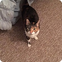 Adopt A Pet :: Willow Grace - North Haven, CT