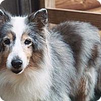 Adopt A Pet :: BiGi - Alderson, WV
