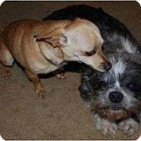 Adopt A Pet :: Deuce and Pedro - Plainfield, CT