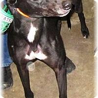 Adopt A Pet :: Sevtron - Harrisburg, PA