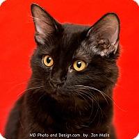 Adopt A Pet :: Zoe - Fountain Hills, AZ