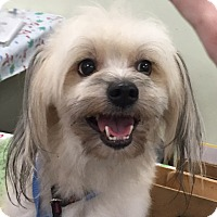 Adopt A Pet :: Tony - Orlando, FL