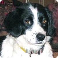 Adopt A Pet :: Piper - Minneapolis, MN