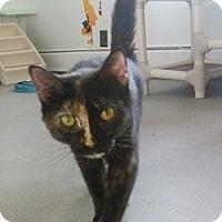 Adopt A Pet :: Twix - Hamburg, NY