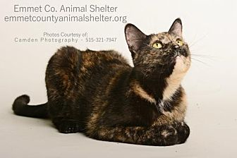 Domestic Shorthair Cat for adoption in Estherville, Iowa - Elizabeth