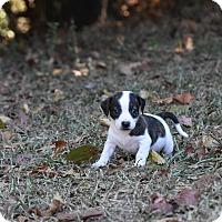 Adopt A Pet :: Purnell - Groton, MA