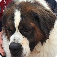 Adopt A Pet :: Brix - Denver, CO