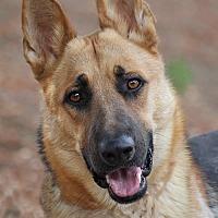 Adopt A Pet :: Chios von Cologne - Los Angeles, CA