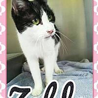 Adopt A Pet :: Zelda - Edwards AFB, CA