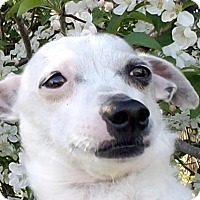 Adopt A Pet :: Spotty - Sheridan, IL
