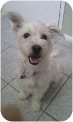 Terrier (Unknown Type, Small) Mix Dog for adoption in Encino, California - Luna