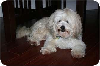Lhasa Apso Mix Dog for adoption in Vancouver, British Columbia - Jackson - I love to swim!