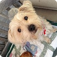 Adopt A Pet :: Ms Lucky - Atascadero, CA