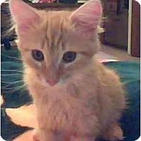 Adopt A Pet :: Tigger - Davis, CA