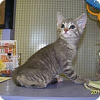 Adopt A Pet :: Lulu - Dover, OH