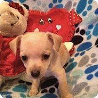 Adopt A Pet :: Baby James - Marlton, NJ