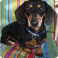 Adopt A Pet :: Radcliffe - San Jose, CA