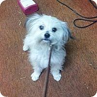Adopt A Pet :: Monster - Cumberland, MD