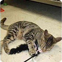 Adopt A Pet :: Nikida (Nikki) - Fort Lauderdale, FL