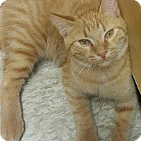 Adopt A Pet :: Solomon - West Dundee, IL