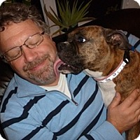 Adopt A Pet :: Jenny - Cornwall, ON