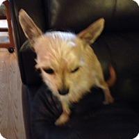 Adopt A Pet :: Paco - Seattle, WA