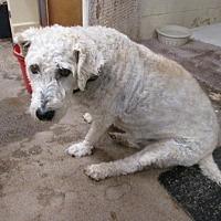 Adopt A Pet :: Annie - Dodge City, KS