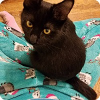 Adopt A Pet :: Gidget - Huntley, IL