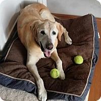 Adopt A Pet :: Johnson - Austin, TX