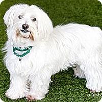 Adopt A Pet :: Georgie - Mission Viejo, CA