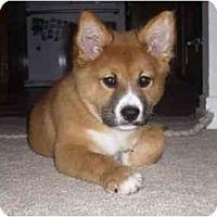 Adopt A Pet :: Tsuki - Marysville, CA