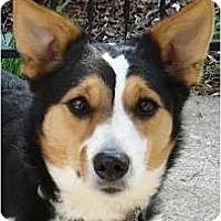 Adopt A Pet :: Miss Lucky - Kingwood, TX