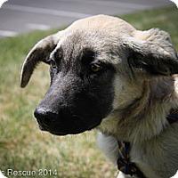 Adopt A Pet :: Tatum - Broomfield, CO