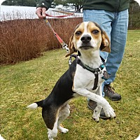 Adopt A Pet :: Smokie (In Foster) - Freeport, ME