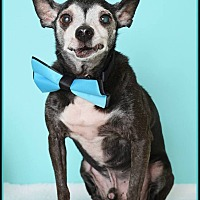 Adopt A Pet :: Felix - Phoenix, AZ