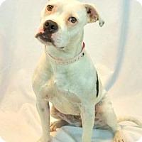 Adopt A Pet :: Akira - New Orleans, LA