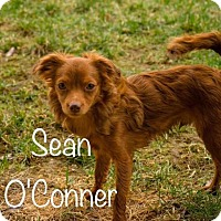 Adopt A Pet :: Sean O'Connor - Nicholasville, KY