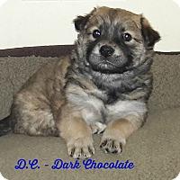 Adopt A Pet :: DC (fostered in SC) - Cranston, RI