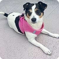 Adopt A Pet :: Tinker - West Palm Beach, FL
