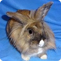 Adopt A Pet :: Tara - Woburn, MA