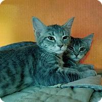 Adopt A Pet :: Garek & Gracie - Elyria, OH